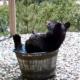 bathtubear2